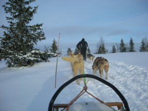 Dog sled (passenger view)